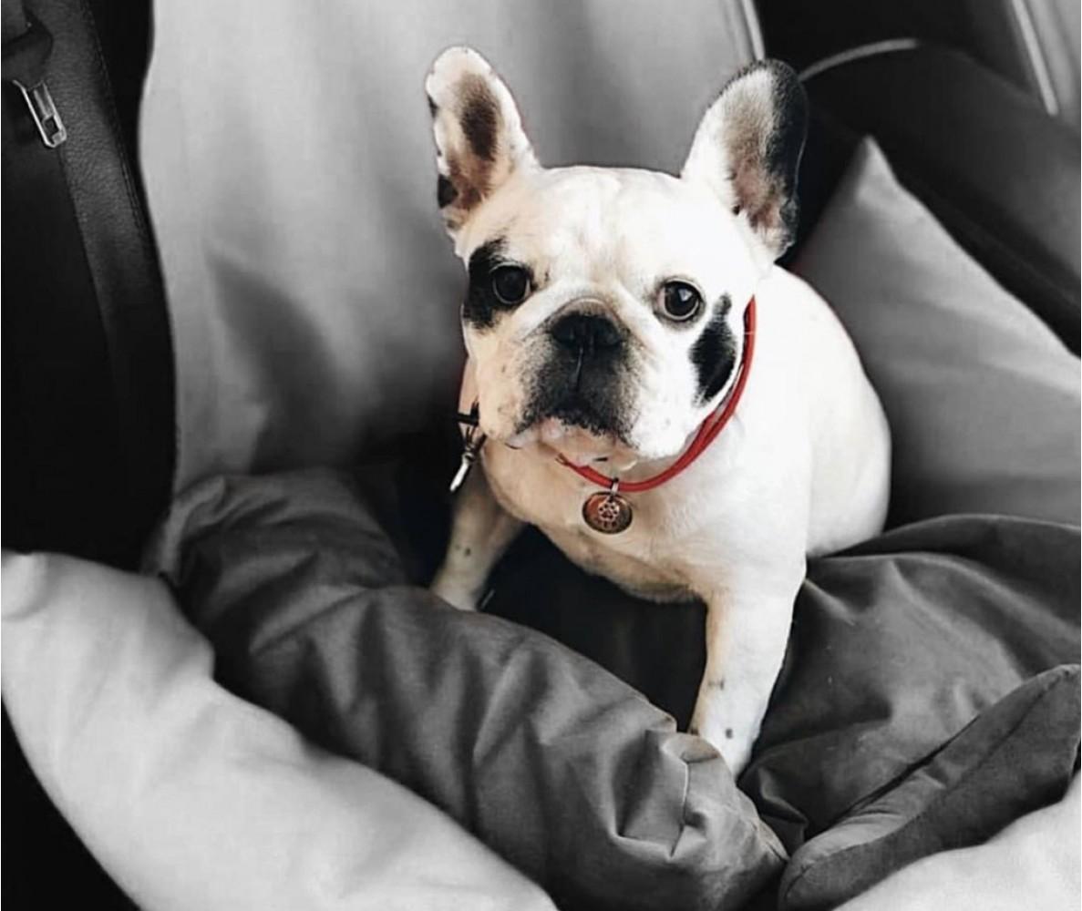 Автокресло для собак | серое |  50 x 50 см