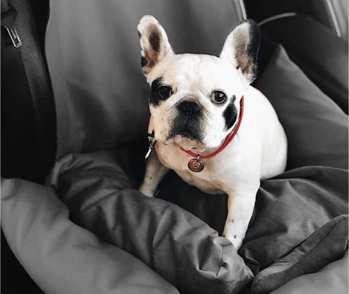 Автокресло для собак | темно-серое |  50 x 50 см