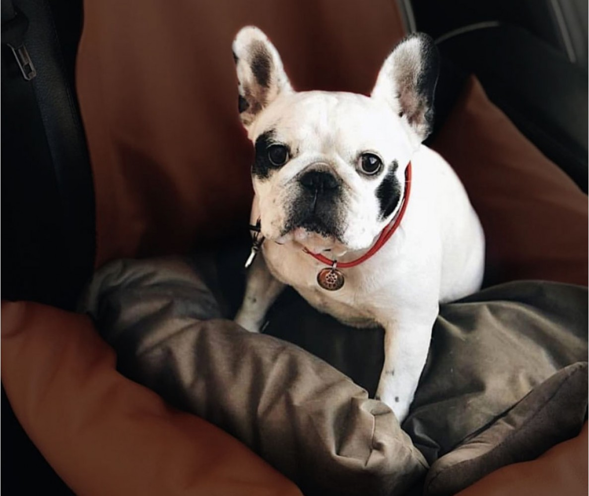 Автокресло для собак |темно- коричневое | 50 х 50 см