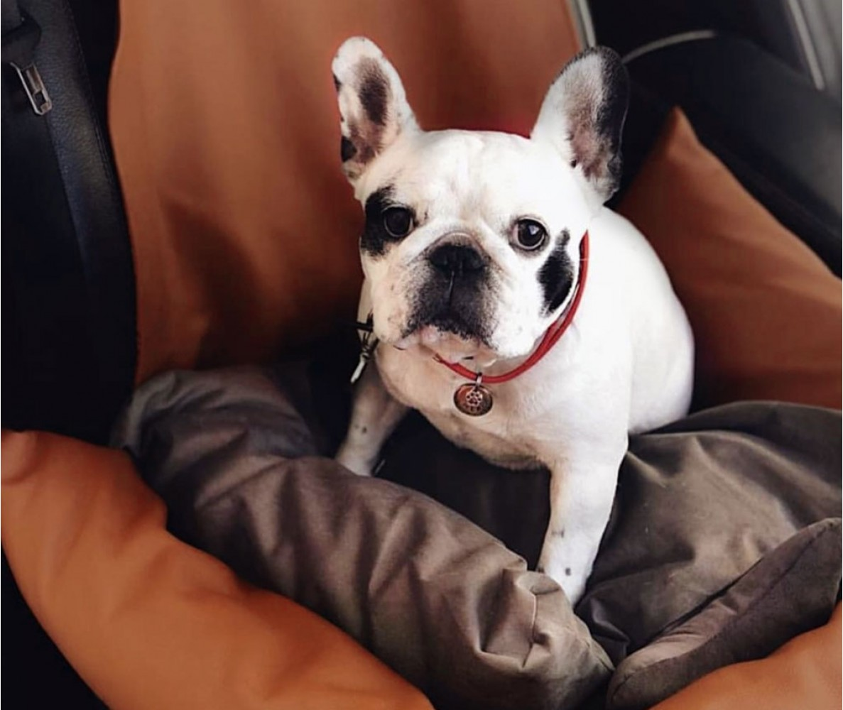 Автокресло для собак | коричневое | 50 х 50 см