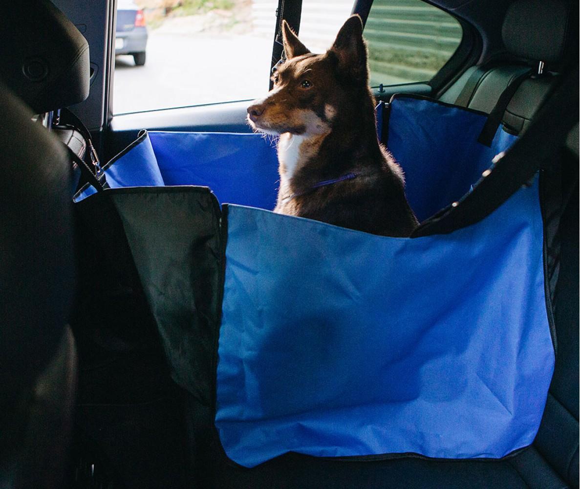 Автогамак для перевозки собак  |  синий
