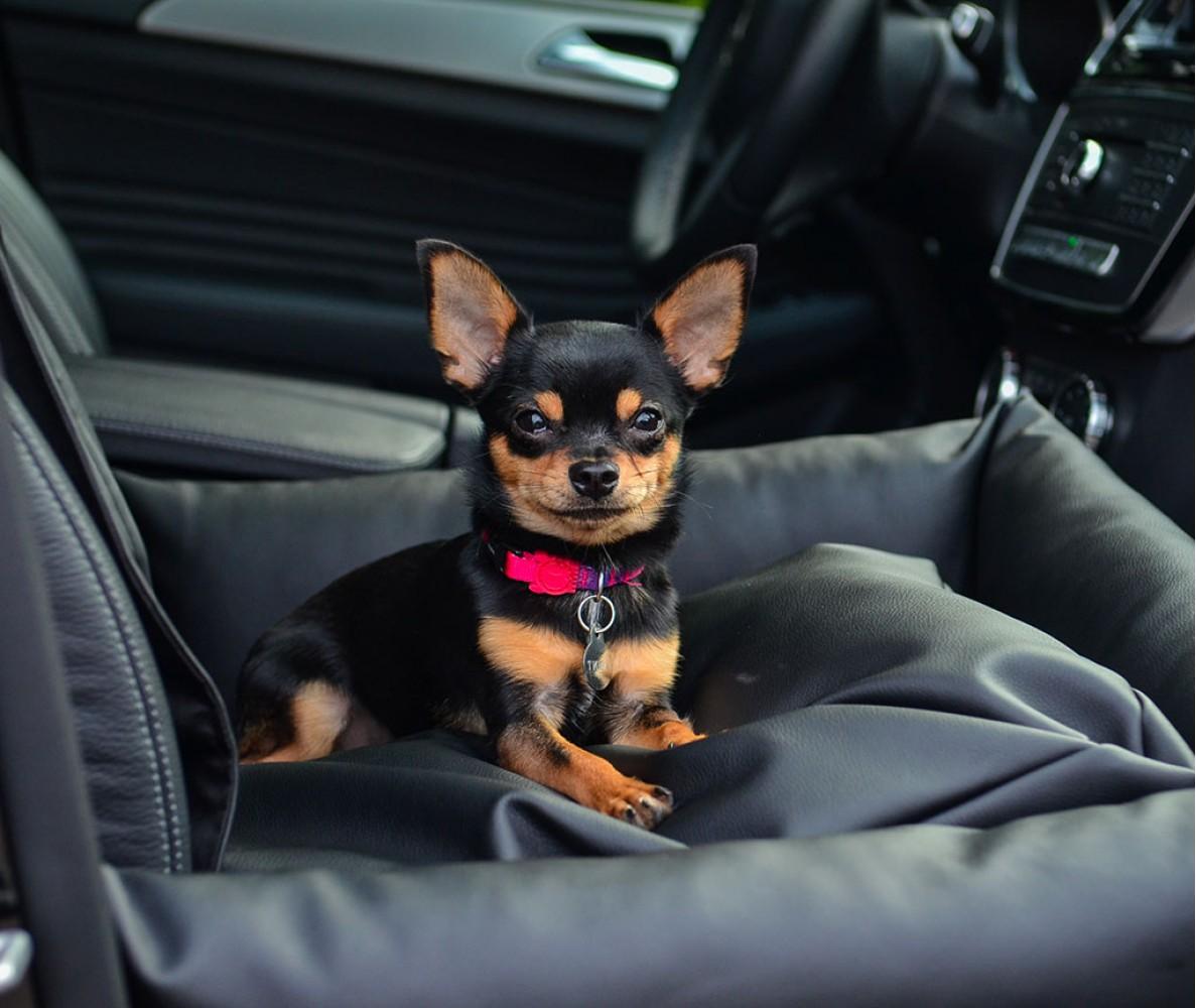 Автокресло для собак | черное | 50 х 50 см