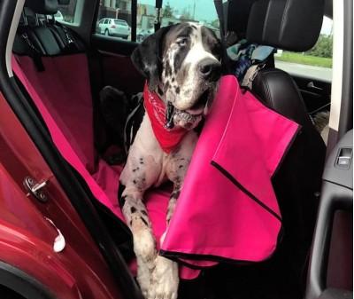 Автогамак-трансформер для перевозки собак |  розовый