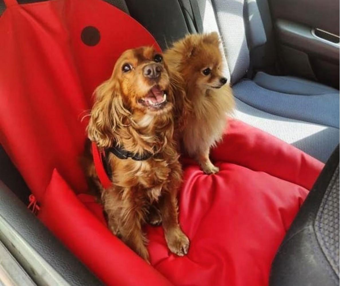 Автокресло для собак | красное |  50 x 50 см