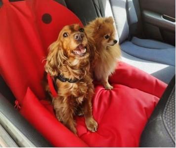 Автокресло для собак | красное |  5...