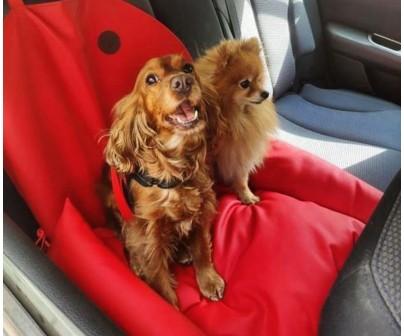 Автокресло для собак   красное    5...