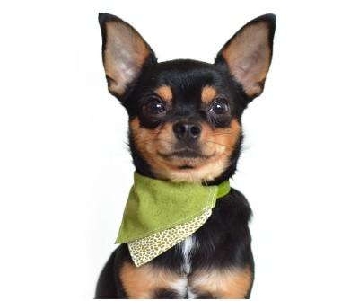 Бандана для собак и кошек на ошейник | Грин Дей