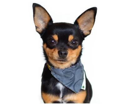 Бандана для собаки и кошки на ошейник  | Грей