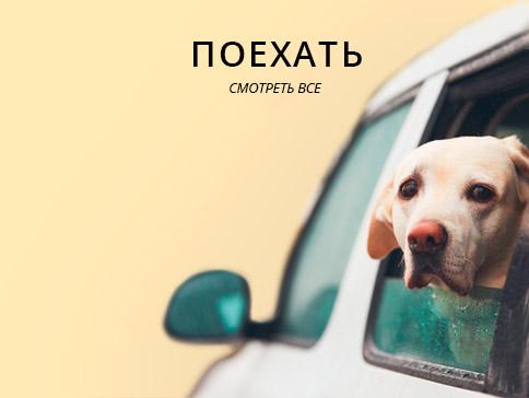 Атогамаки, автокресла для собак