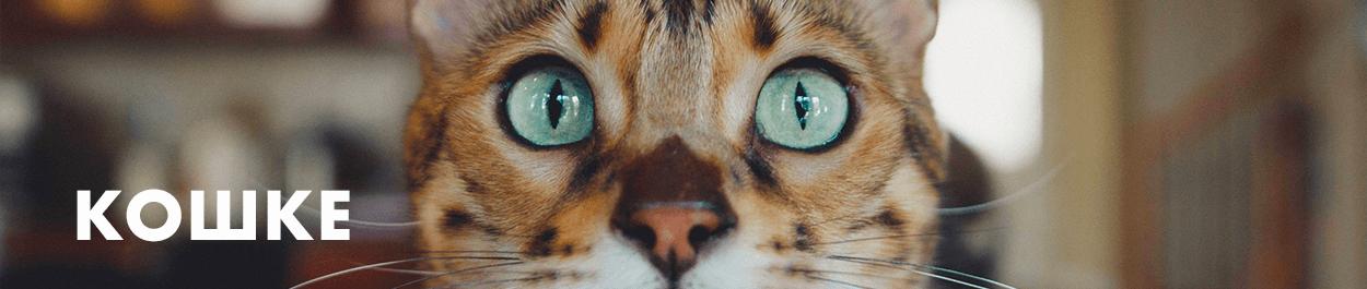 Товары для кошек, когтеточки, лежанки, домики для кошек | зоотовары Artodogs.ru | Пет шоп Артодогз