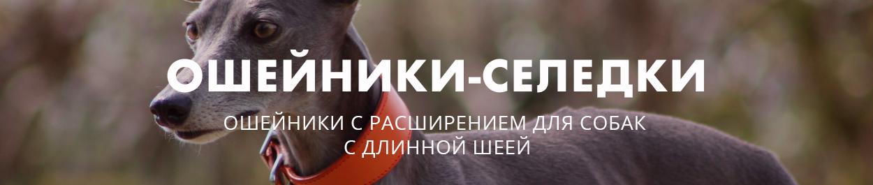 Ошейник селедка для собак