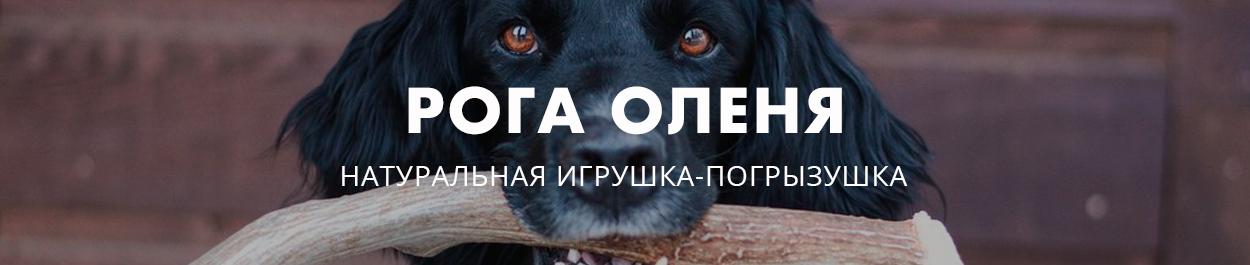 Рога оленя для собаки