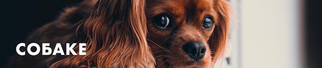 Товары для собак, ошейники для собак, амуниция, лежанки для собак, автогамаки, автокресла, игрушки для собак, лакомства корма для собак