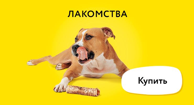 Лакомства для собак, миски для корма