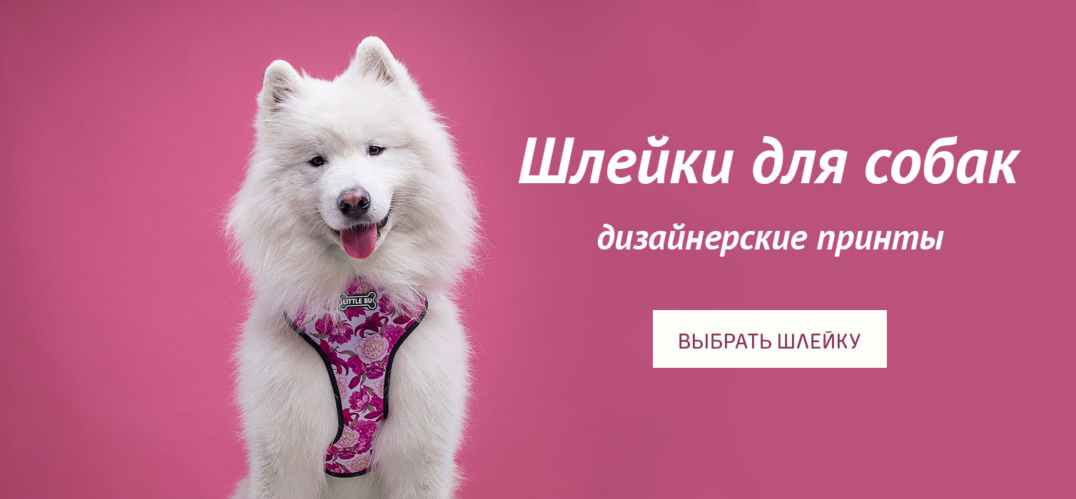 шлейки для собак, купить шлейку для собаки