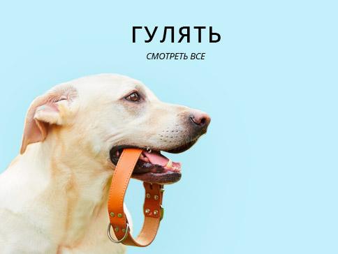 Ошейники, поводки для собак