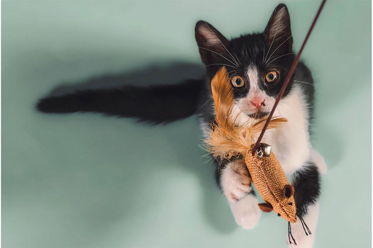 Игрушки с кошачьей мятой: для чего они нужны и как действуют на кошек