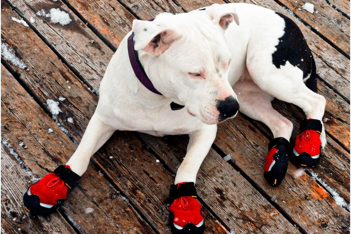 Ботинки для собак - мода или необходимость?