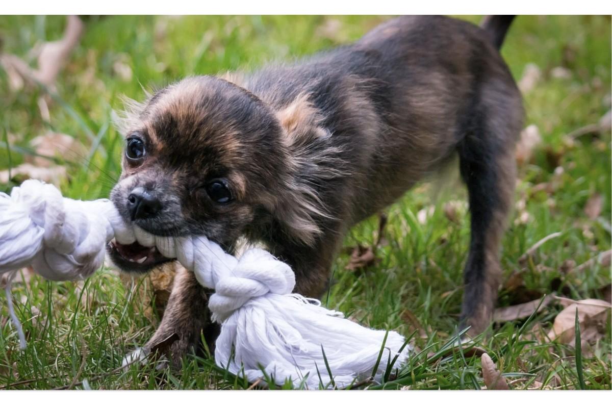 Почему собаки трясут свои игрушки
