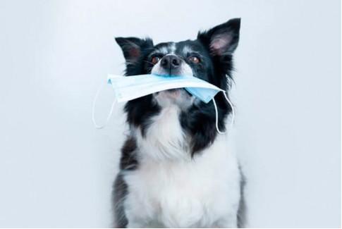 COVID-19 у собак: что владельцы питомцев должны знать о коронавирусе