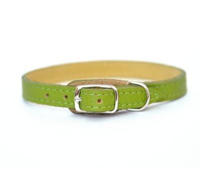 Ошейник для маленькой собаки и кошки кожаный | оливковый  | 1 см x 20-26 см | XS