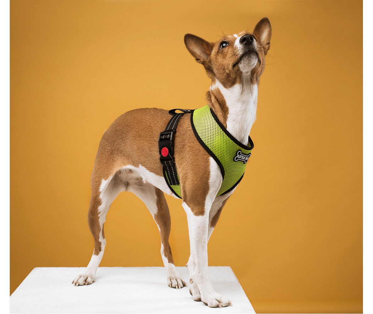 """Шлейка для собак мелких пород """"Green"""", размеры XS-S"""