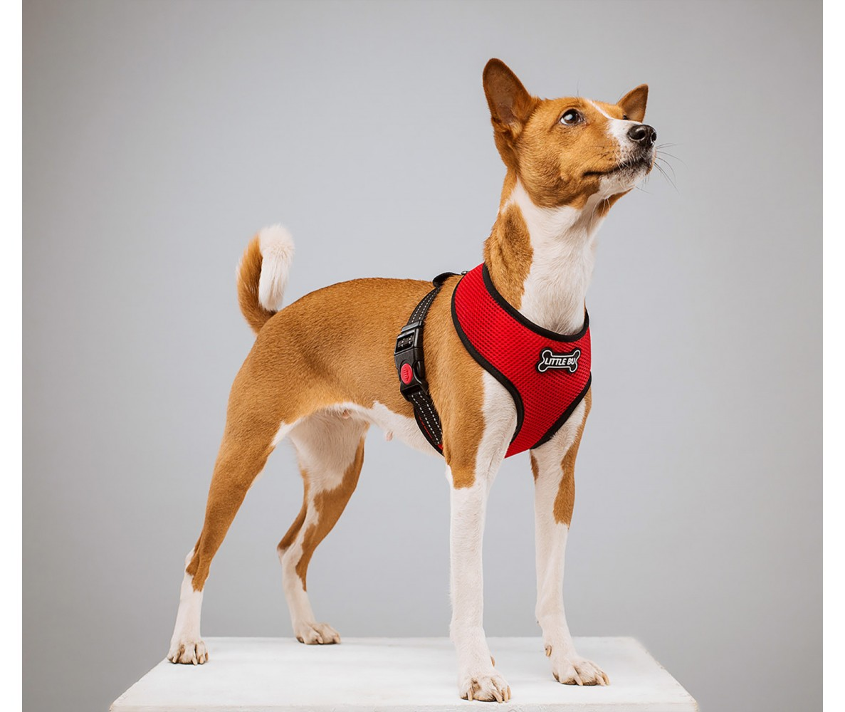 """Шлейка для маленькой собаки """"Рэд"""", размеры XS-S"""