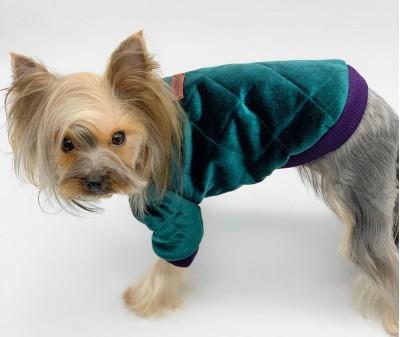 Куртка для собаки, бархатная | зеленая
