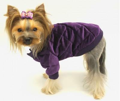 Куртка для собаки, бархатная | фиолетовая