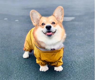"""Дождевик, модель """"Корги"""", желтый"""
