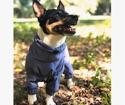 Дождевик - грязевик для собак, синий