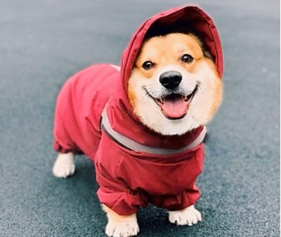Дождевик - грязевик для собак, бордо