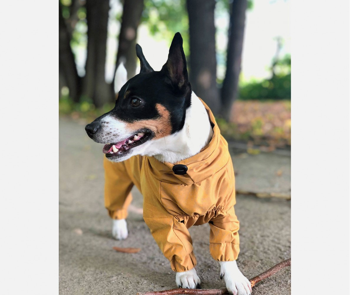 Дождевик - грязевик для собак, желтый