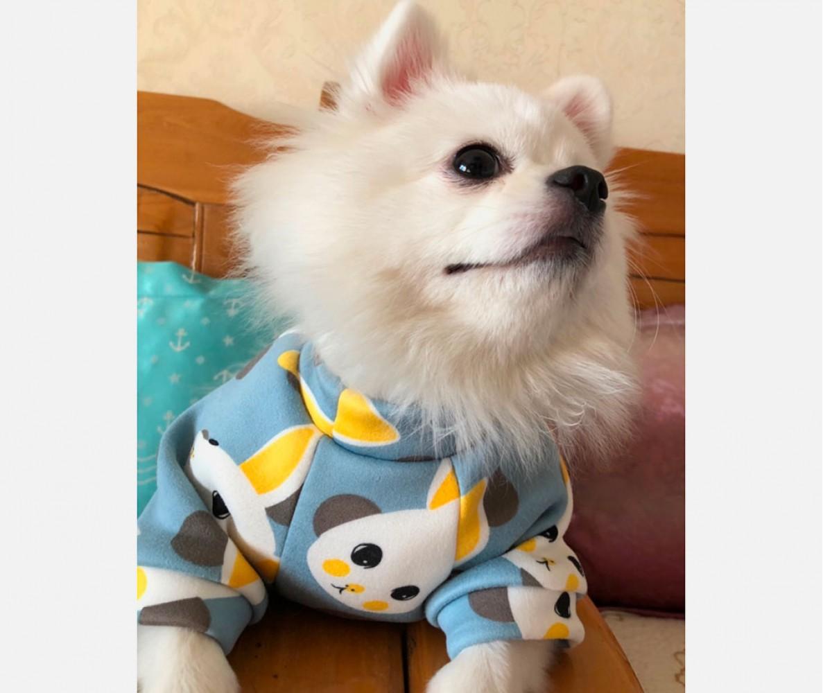 """Толстовка худи для маленьких собак """"Зайчики"""" голубая"""