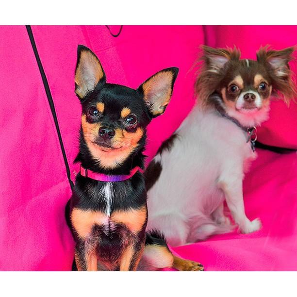 Автогамак для перевозки собак |  розовый |  360°